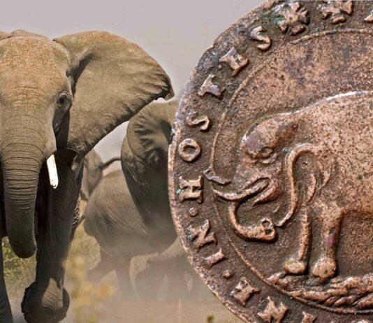 """Anche gli elefanti """"nel loro piccolo"""" si incazzano"""