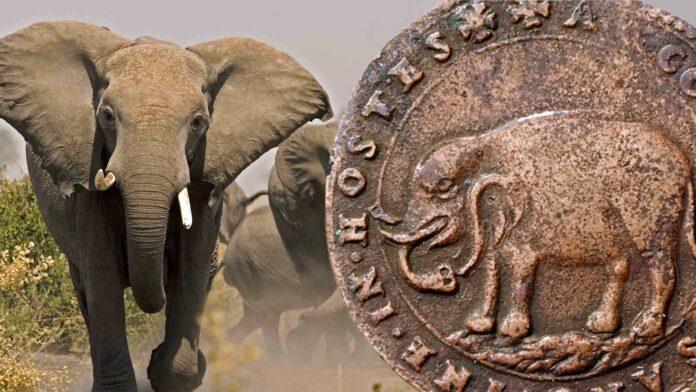 Anche gli elefanti