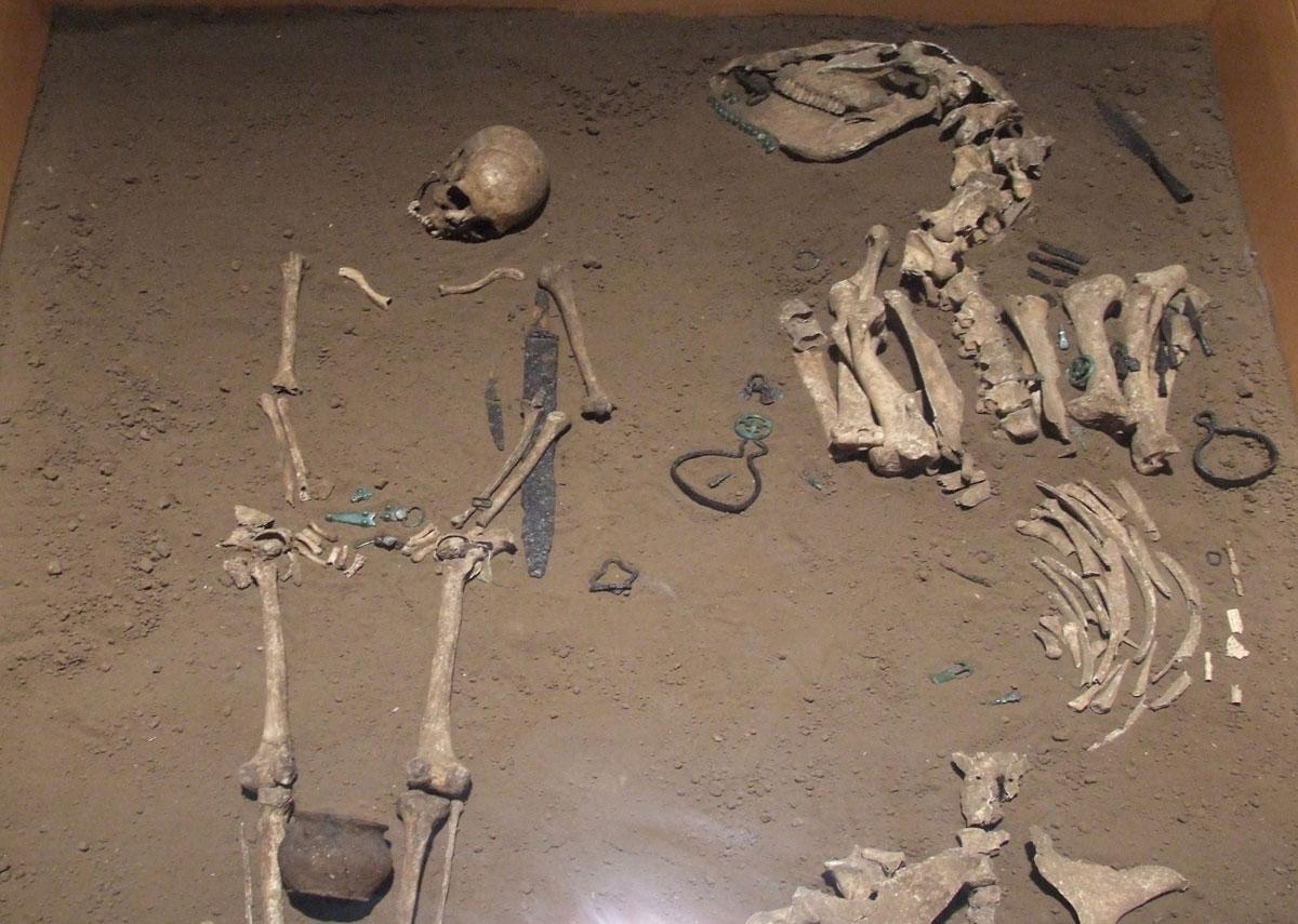Sepoltura di guerriero longobardo col suo cavallo al Museo di Campobasso