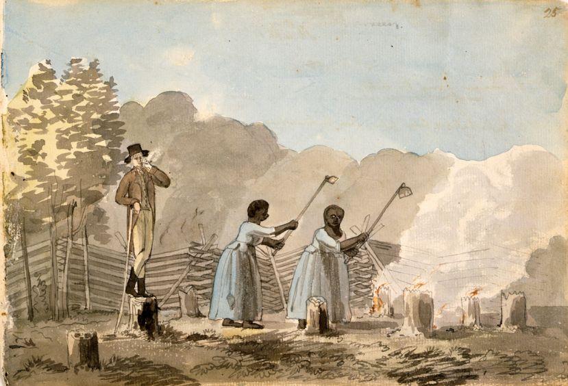 La coltivazione del tabacco nelle colonie americane: gli schiavi al lavoro e il padrone ad osservare... fumandosi un bel sigaro